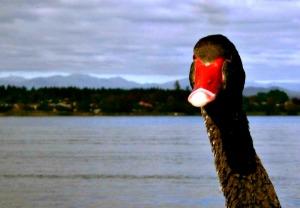 Taupo Lake, Taupo, New Zealand. Photo credit: Belu.