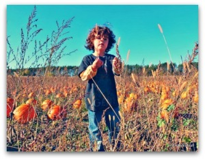 boyinpumpkinfield