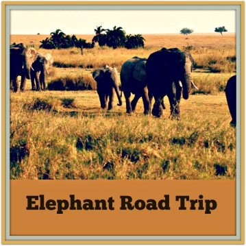 Elephant Road Trip