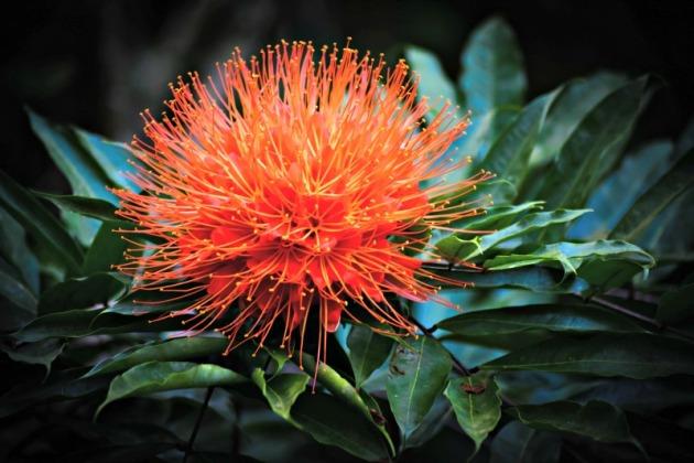 DuPlooys Botanical Garden Belize