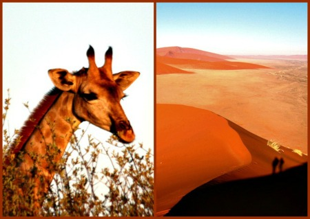 Giraffe & Namibian sand Collage