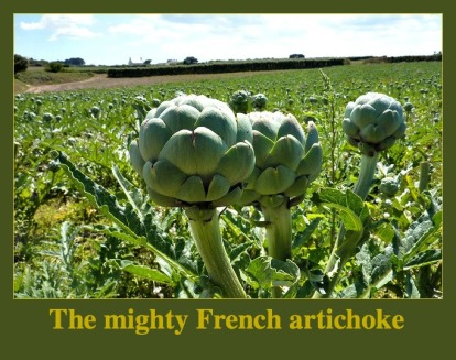 The Mighty French Artichoke