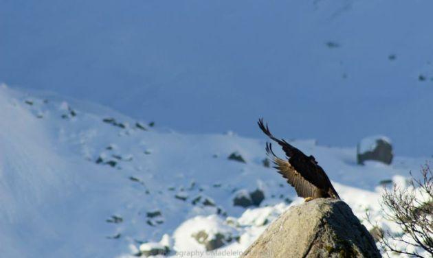 eagle_800x