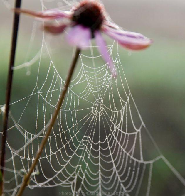 spiderweb-s_800x