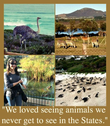 South African animals collage